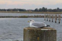 Gabbiano che si siede nel porto Fotografia Stock Libera da Diritti