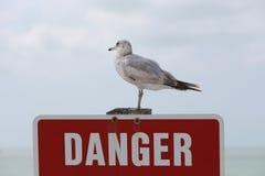 Gabbiano che si siede su un segno del pericolo Fotografia Stock Libera da Diritti