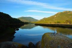 Gabbiano che si siede su una pietra al fiume soggetto alle maree Immagine Stock