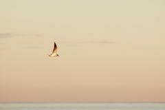 Gabbiano che sorvola il mare calmo, cielo dipinto luminoso Fotografie Stock Libere da Diritti