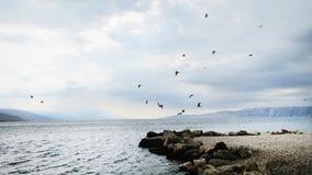 Gabbiano che sorvola il mare   Croato - Povile immagine stock libera da diritti