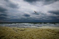 Gabbiano che sorvola il mare tempestoso in autunno fotografia stock libera da diritti