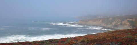Gabbiano che sorvola la linea costiera centrale irregolare di California a Cambria California U.S.A. immagini stock