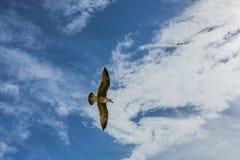 Gabbiano in cielo con le nuvole ed il sole luminoso Immagine Stock