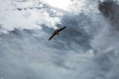 Gabbiano in cielo con le nuvole ed il sole luminoso Immagine Stock Libera da Diritti