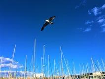 Gabbiano, cielo, libertà e volo fotografia stock libera da diritti