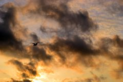 Gabbiano, gabbiano, cielo, nuvola, tramonto, mosca, autunno, fondo immagini stock libere da diritti