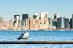 Gabbiano con gli edifici di Manhattan nei precedenti fotografia stock libera da diritti