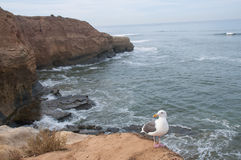 Gabbiano con il fondo dell'oceano Fotografie Stock