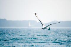 Gabbiano con le ali aperte Immagini Stock Libere da Diritti