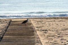 Gabbiano in corridoio di legno sulla sabbia della spiaggia immagine stock libera da diritti