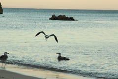 Gabbiano dal mare Immagini Stock