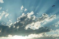 Gabbiano del raggio di Sun Fotografia Stock Libera da Diritti