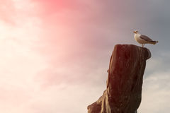 Gabbiano dell'uccello che si siede sul vecchio albero asciutto Fondo della nuvola Concetto Marine Dream Fotografia Stock