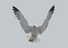 Gabbiano dell'uccello su un fondo nero Fotografia Stock