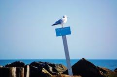 Gabbiano di Coney Island New York sulla segnaletica di sicurezza Fotografie Stock