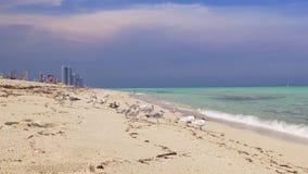 Gabbiano di giorno di estate di Miami Beach e turista 4k Florida S.U.A. video d archivio