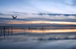 Gabbiano di mare Immagini Stock