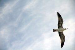Gabbiano di mare Fotografia Stock Libera da Diritti