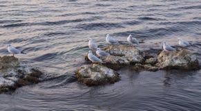 Gabbiano di mare Immagine Stock Libera da Diritti