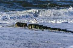 Gabbiano di mare al mare Fotografia Stock Libera da Diritti
