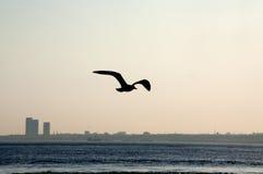 Gabbiano di mare al tramonto Fotografia Stock Libera da Diritti