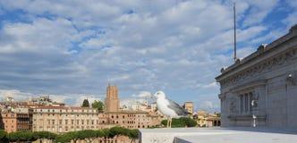 Gabbiano di mare con il vecchio orizzonte di Roma Fotografia Stock