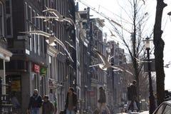 Gabbiano di mare di volo a Amsterdam Fotografie Stock Libere da Diritti