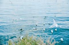 Gabbiano di mare ed acqua blu in Erhai, Dali, Yunan, Cina fotografia stock