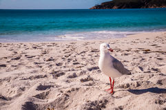 Gabbiano di mare sulla spiaggia immagine stock libera da diritti