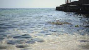 Gabbiano di mare sulla superficie del mare archivi video