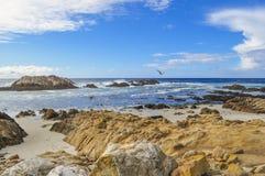 Gabbiano di mare vicino alla roccia della guarnizione Fotografia Stock