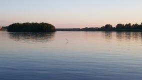 Gabbiano di volo molto vicino alla superficie dell'acqua Fotografie Stock Libere da Diritti