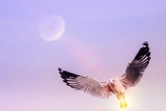 Gabbiano di volo nel cielo con effetto del chiarore di illuminazione del sole Fotografia Stock