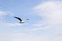 Gabbiano di volo nel cielo con le nuvole Immagine Stock