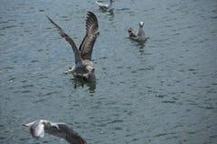 Gabbiano di volo sopra un primo piano del mare Fotografia Stock Libera da Diritti