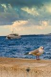 Gabbiano e barca Fotografia Stock