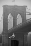 Gabbiano e ponte di Brooklyn Fotografie Stock Libere da Diritti