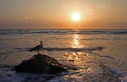 Gabbiano e tramonto Fotografie Stock