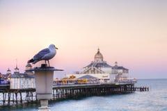 Gabbiano ed Eastbourne Pier Sunset Immagine Stock Libera da Diritti