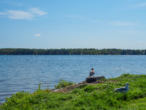 Gabbiano ed oche canadesi sulla riva orientale 4 del lago gull fotografie stock