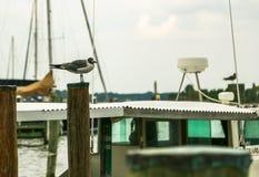 Gabbiano fra le barche Fotografia Stock Libera da Diritti