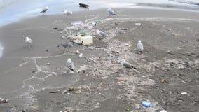 Gabbiano fra rifiuti sulla spiaggia a Napoli stock footage