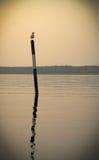 Gabbiano importante che si siede sulla boa del mare alla luce di tramonto del sole Fotografie Stock Libere da Diritti