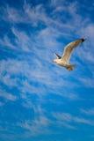 Gabbiano nel cielo Fotografie Stock