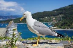 Gabbiano nel villaggio della costa Fotografia Stock Libera da Diritti
