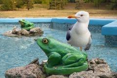 Gabbiano nella fontana della figurina delle rane, Varna, Bulgaria Fotografie Stock