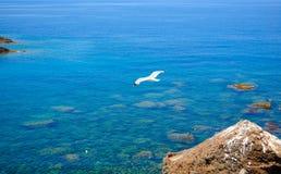 Gabbiano no volo Imagem de Stock Royalty Free