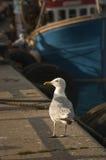 Gabbiano in porto Immagini Stock