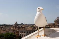 Gabbiano a Roma Immagini Stock Libere da Diritti